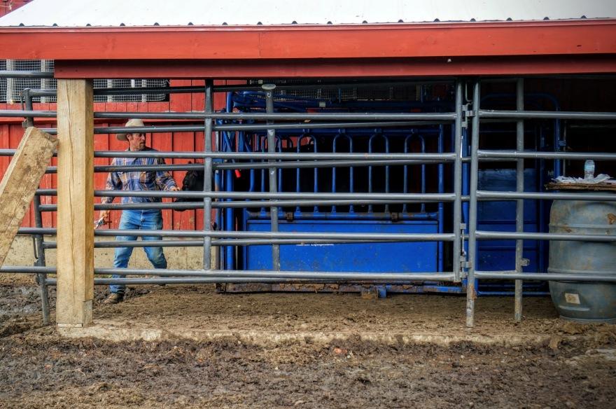 Royalton Farms